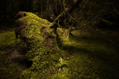Irish-Woodland-Photography