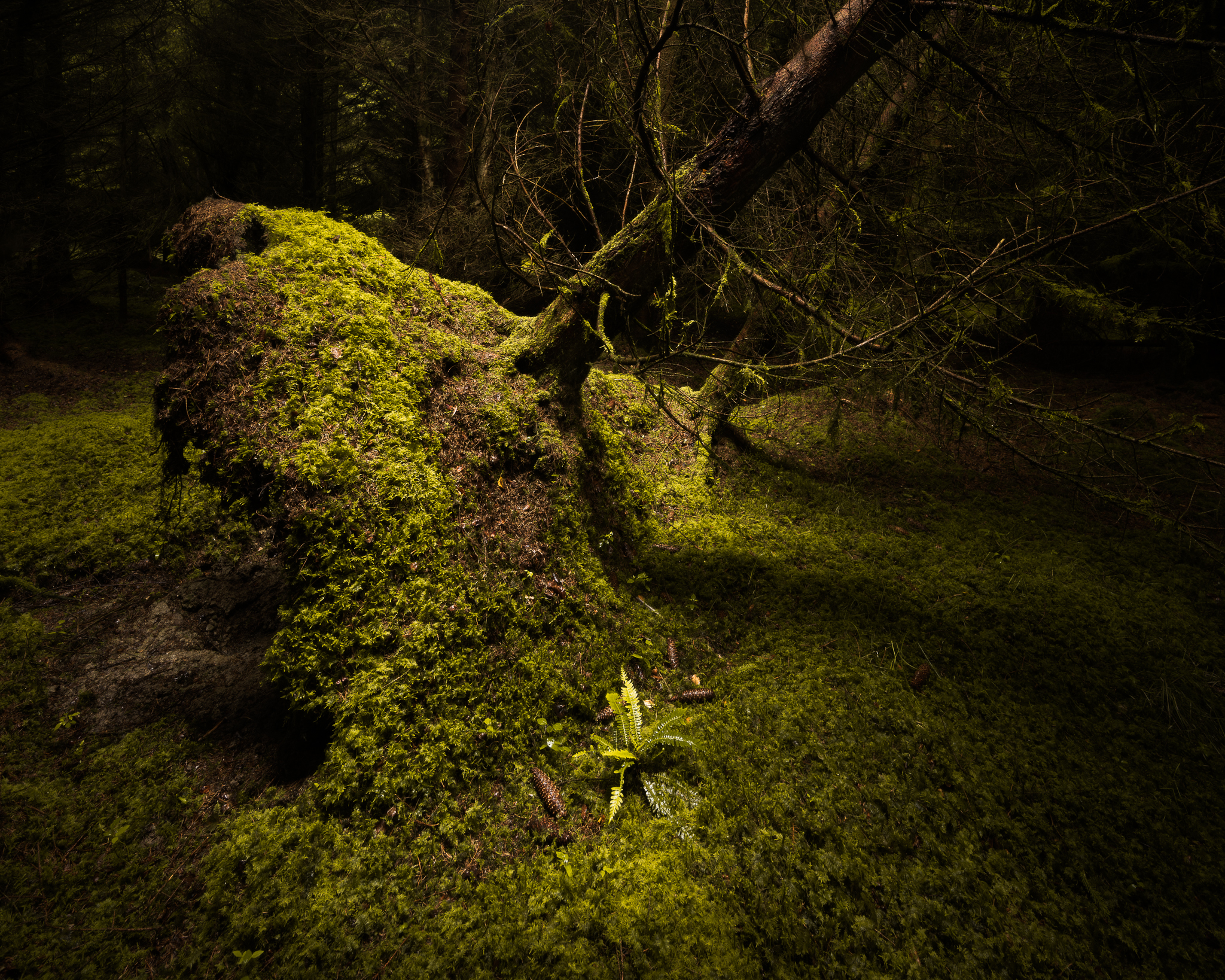 irish woodland photography